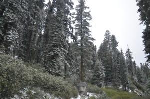 Auf dem Weg in den Sequoia Nationalpark