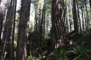 Kleiner Mensch zwischen großen Bäumen